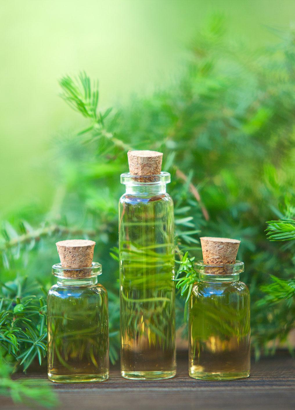 Çay Ağacı Yağının Saça Faydaları Nelerdir?